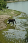 Elphant_at_chobe_ntl_pk